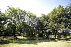 tir-cethin-garden_6059350680_o